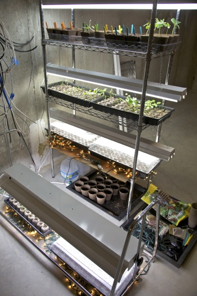 Seedling Light Stand